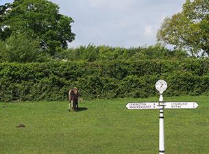 Der New Forest ist das älteste königliche Jagdrevier Englands, in denen die halbwilden Ponyherden große Freiheiten genießen.